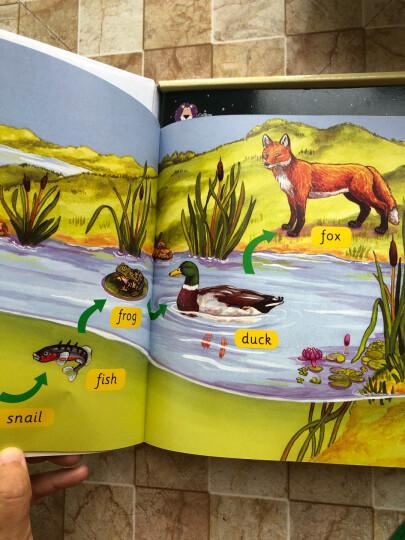 大猫自然拼读三级1 Big Cat Phonics(适合小学三年级 读物5册+阅读指导1册+拼读卡片1套+MP3光盘1张 点读版) 晒单图