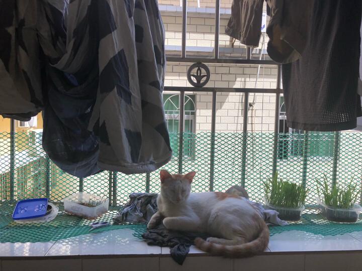 谷登(GOLDEN)猫用六种菌3g*8包/盒  谷登益生菌猫咪专用  宠物益生菌  调理肠胃  幼猫肠胃宝 晒单图