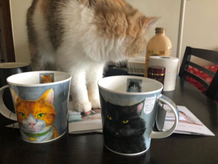 丹侬(dunoon) 英国进口杯子 咖啡杯马克杯陶瓷杯情侣杯杯子创意骨瓷杯 喵星人 喵星人-黑猫 晒单图