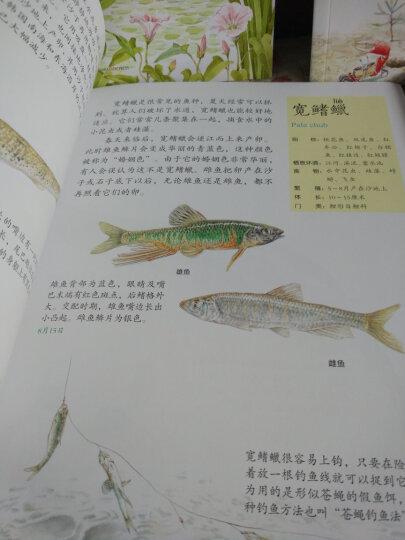 水边的自然课 有趣的海滨生物 晒单图