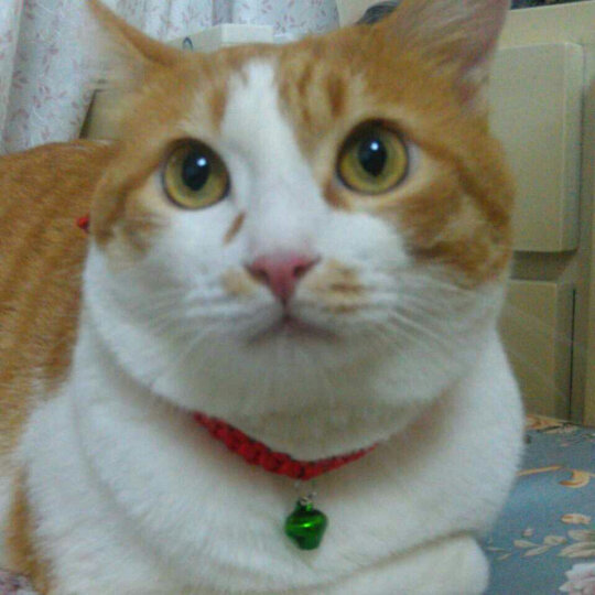 【1件7折、3件5折】谷登化毛膏120g猫咪去毛球吐毛球猫用营养膏调理肠胃助消化宠物营 晒单图