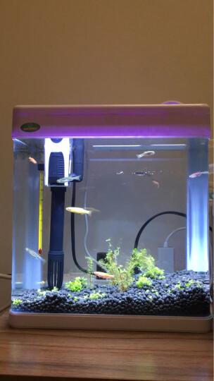 sera 喜瑞活性炭鱼缸用活性炭滤材水族过滤材料净化水质250克 晒单图