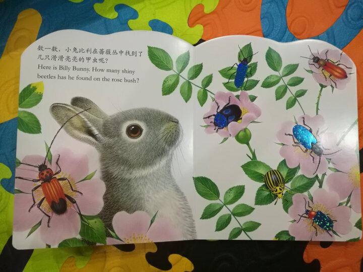亮丽精美触摸书系列:小猫头鹰奥奇(中英双语)(新版) 晒单图