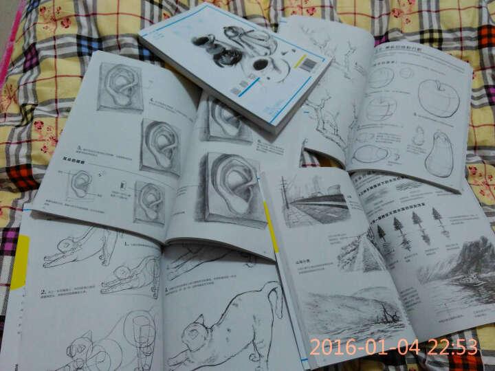 素描基础:石膏像+画静物+画动物+画人物+画植物+画风景(套装共6册) 晒单图