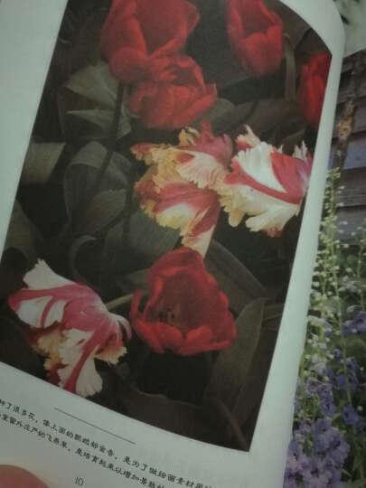塔莎的花园 家庭园艺 送给所有热爱自然和生命的朋友 晒单图