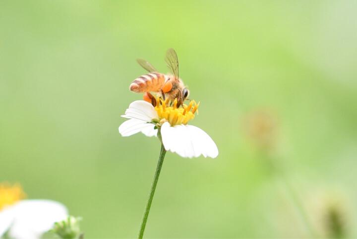 腾龙(Tamron)SP AF60mm F/2 DiII LD (IF)MACRO 1:1 [G005] 半画幅恒定 定焦微距单反镜头 昆虫植物(佳能卡口镜头) 晒单图