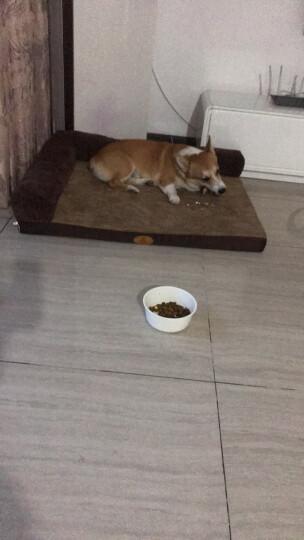 麦富迪 狗粮藻趣儿成犬粮2.5kg 晒单图