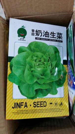 奶油生菜种子 四季播蔬菜种子 生吃超嫩营养蔬菜沙拉 奶油香 阳台蔬菜种子 晒单图