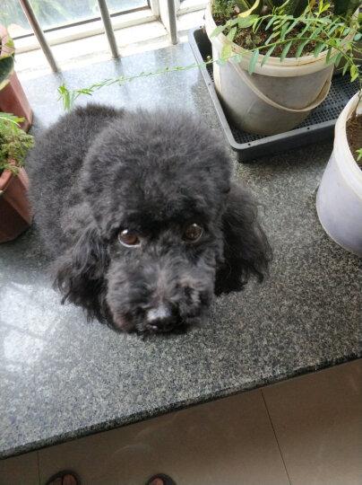 拜客(BUCKEYE)小型犬专用狗粮成犬2.5KG 茶杯泰迪贵宾博美吉娃娃比熊小狗宠物犬粮K92 晒单图