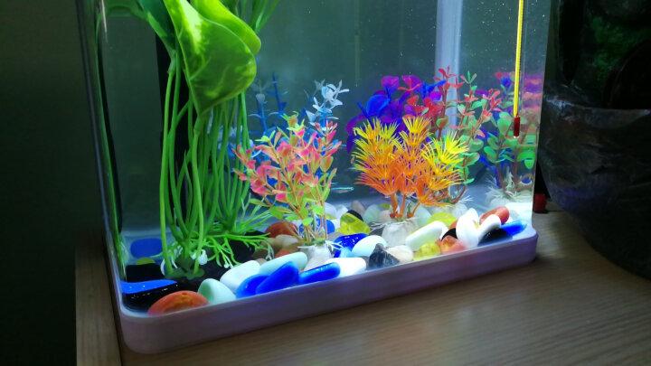 樂享一寵 造景石头 养鱼缸造景水族箱装饰底砂 多色石头养乌龟缸布景 420g 360g 晒单图