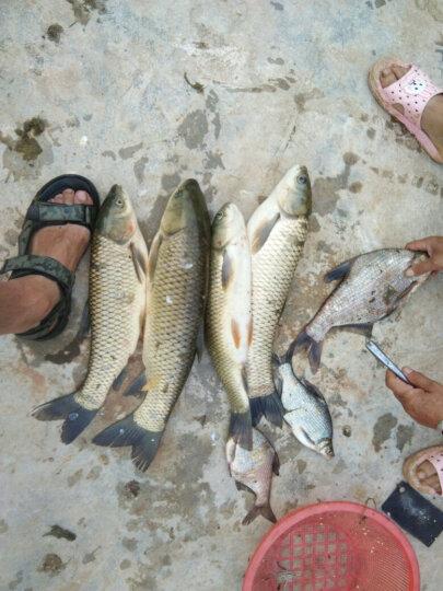 佳钓尼(JIADIAONI) 伏魔鱼护 鱼护网鱼网兜装鱼涂胶万向鱼兜竞技鱼护 (休闲)40*220涂胶鱼护带包 鱼护 晒单图