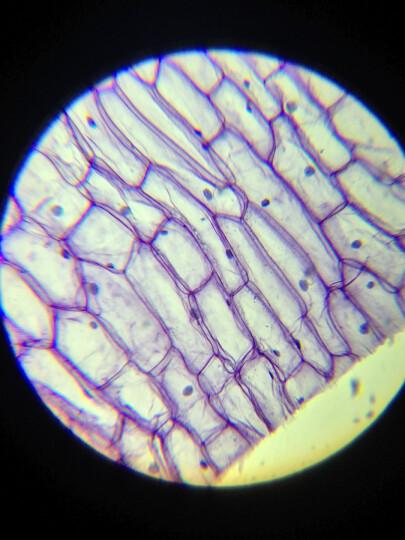 萨伽(SAGA) 生物显微镜标本切片 50/100/200片学生观测动植物人体组织细菌 200片装(高教版) 晒单图