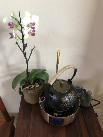 JIN WAN FU 铁壶电陶炉套装抽水式家用煮茶炉自动上水电热水壶烧水电磁炉铸铁茶壶茶具 牡丹铸铁壶单个 晒单图