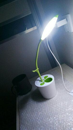 千宏  创意时尚LED台灯卧室床头护眼灯学生学习工作书房充电台灯 USB台灯小台灯 小绿叶-浅绿色 调光开关 晒单图