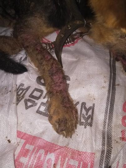 枫格肤健宠物falcone宠物皮肤病药狗狗猫咪口服真菌药治螨虫 12片 晒单图