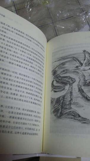 沙乡年鉴(精装插图典藏本) 晒单图