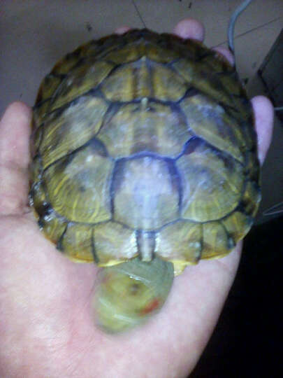 淘歌(TG)  龟博士 巴西龟水龟草龟金钱龟 乌龟粮 乌龟宝宝龟饲料 100g*2包 晒单图