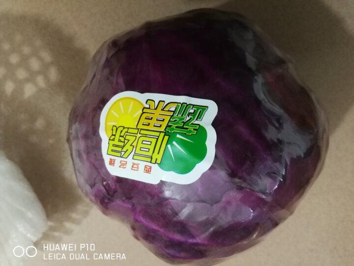 恒绿 紫甘蓝约700g1个蔬菜火锅涮菜食材农产品紫色包心菜 晒单图