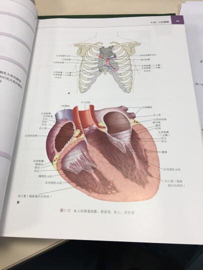 LWW解剖学精要图谱:胸部、腹部和盆部 晒单图