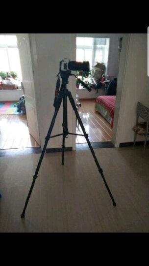 缔杰(DIGIPOD)TR562F 便携三脚架 手机单反相机专业三角架 摄影支架摄像云台套装 (黑色) 晒单图