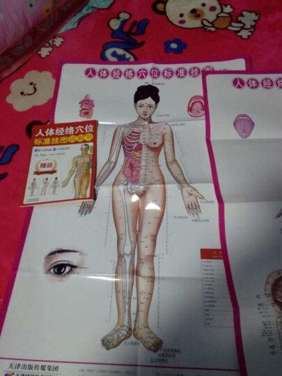 人体经络穴位标准挂图(女性)(3张) 晒单图