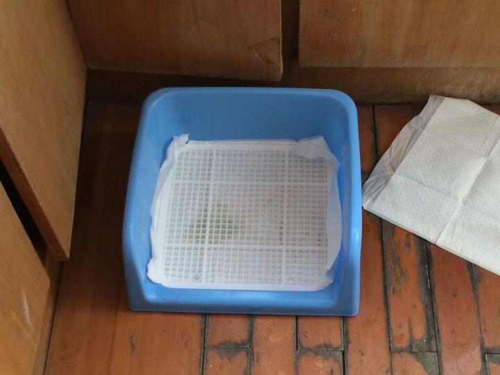 PETCIRCLE 狗狗厕所泰迪比熊小型犬铺垫式便盆塑料可拆洗 买大号送消毒液和尿片 蓝色(普通款无立柱) 晒单图