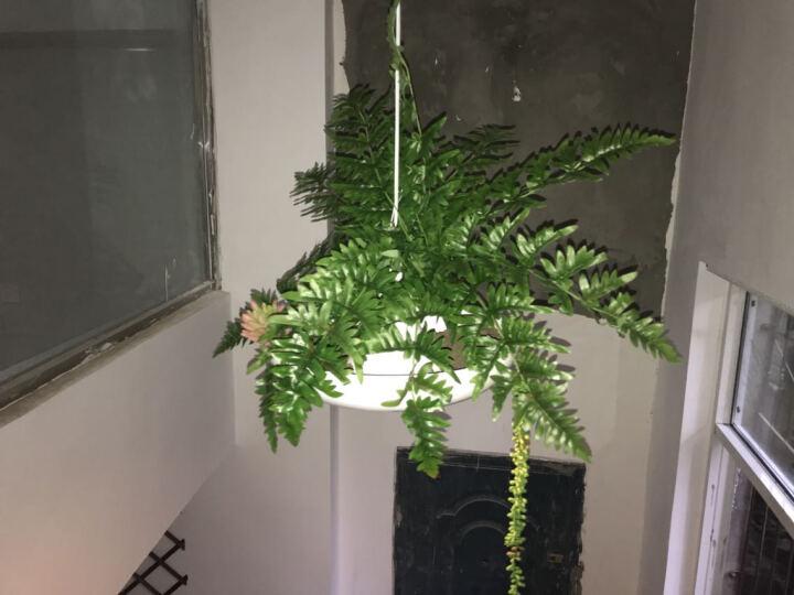 光团精工 植物铝材盆栽 北欧意大利设计铝材餐厅吊灯空中花园植物灯具阳台过道灯 庭院灯 晒单图