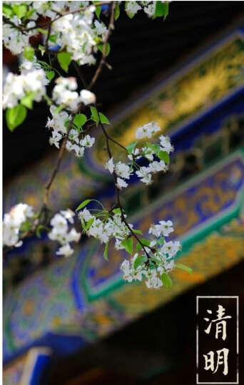 紫禁城的物候明信片 晒单图