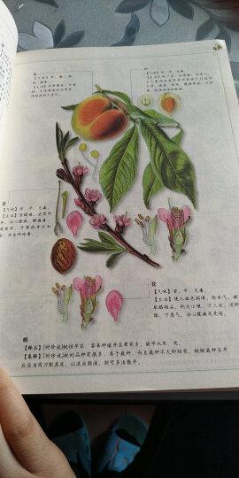 图解本草纲目:认识中国第一药典(2014经典图解畅销版) 晒单图