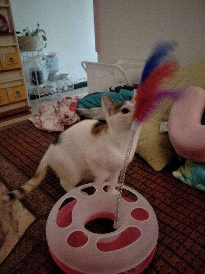 dogstory 逗猫转盘 宠物玩具 含弹簧羽毛/铃铛滚球 粉色 晒单图