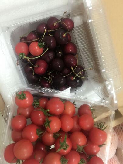 家美舒达 千禧番茄 小西红柿 约500g 新鲜蔬菜 晒单图
