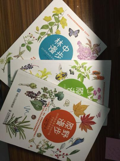 原野漫步:250种植物果实与红叶的手绘自然笔记+林中漫步 :231种植物的手绘自 晒单图