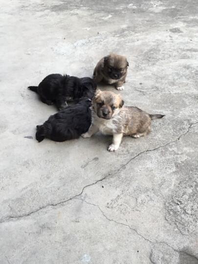 力狼狗粮 幼犬益生菌主粮 泰迪比熊吉娃娃博美萨摩边牧松狮哈士奇大中小型犬通用型 5kg10斤 晒单图