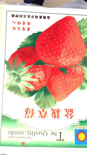 颜集卉 D蔬菜瓜果种子 家庭园艺庭院 红盆栽草莓 150粒 晒单图