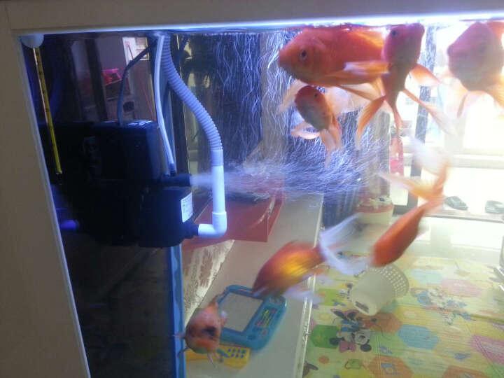 鱼缸潜水泵多功能合一内置过滤器增氧泵抽水泵喷氧机高效静音过滤泵 PF-9103 35W 三合一多功能潜水泵 晒单图