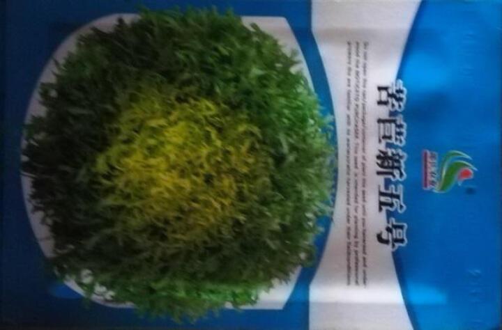 陆地(LD)蔬菜种子 青菜 小白菜 苋菜 油麦菜 茼蒿 生菜 油白菜 有机菜园籽种 香港软尾生菜 晒单图