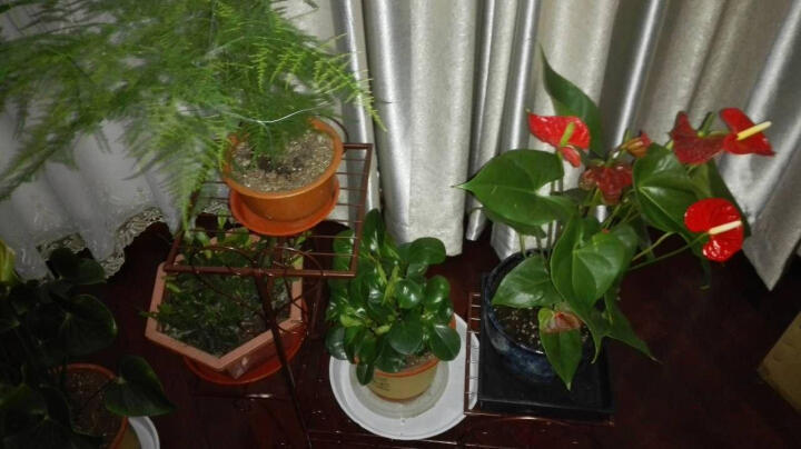有嘉铁艺花架客厅阳台落地室内绿萝吊兰花盆架自行车多层花架子植物架 大号=古铜 晒单图