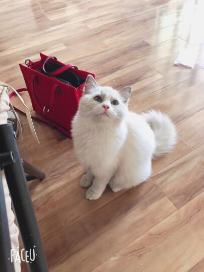 BOTH 宠物羊奶粉 膳食配方 猫狗奶粉 250克 晒单图
