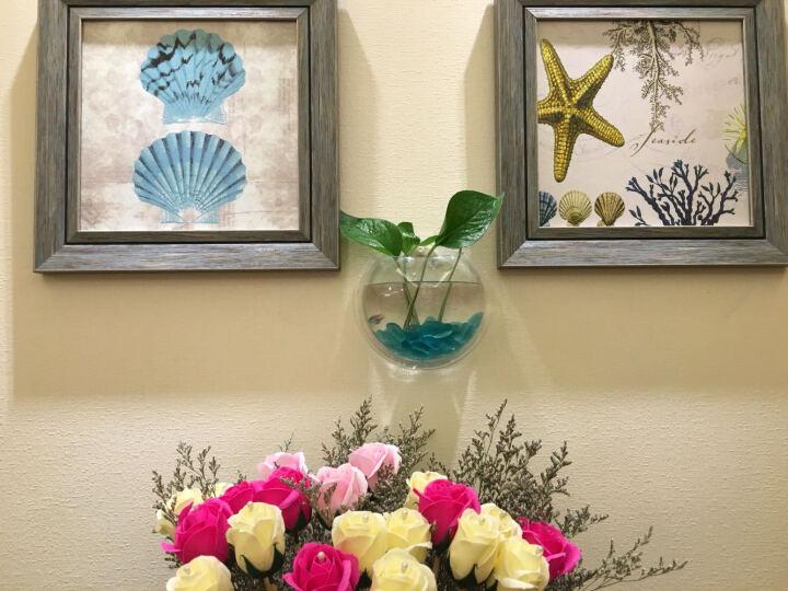 白领公社 鱼缸壁挂鱼缸家居装饰迷你壁式生态造景亚克力小鱼缸水族箱 170mm透明 晒单图
