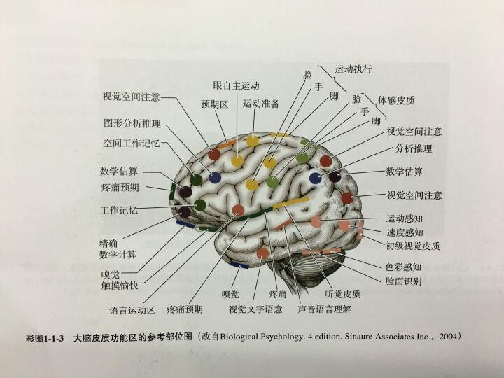 肌电图学图谱 晒单图