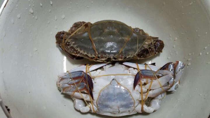 宁波特产 咸蟹梭子蟹500g 咸呛蟹红膏 海鲜炝蟹类制品醉蟹 晒单图
