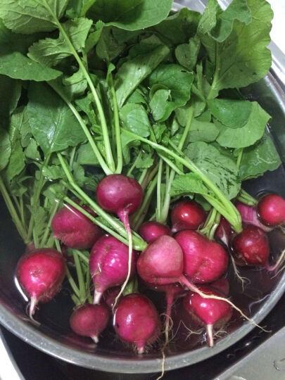 蔬菜种子 彩包种子 萝卜种子 白菜种子 韭菜种子 生菜种子 香菜种子 阳台蔬菜 大叶木耳菜 晒单图