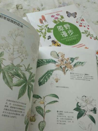 林中漫步 231种植物的手绘自然笔记 晒单图