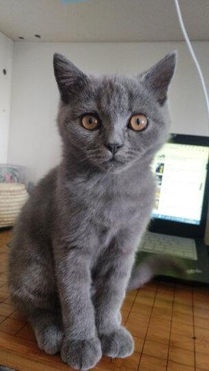 比瑞吉猫粮 天然粮 美毛幼猫粮2kg 添加深海鱼油 晒单图