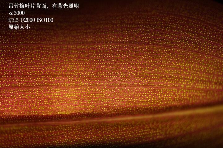 索尼(SONY)E 50mm F1.8 OSS  APS-C画幅定焦镜头(SEL50F18)黑色 晒单图