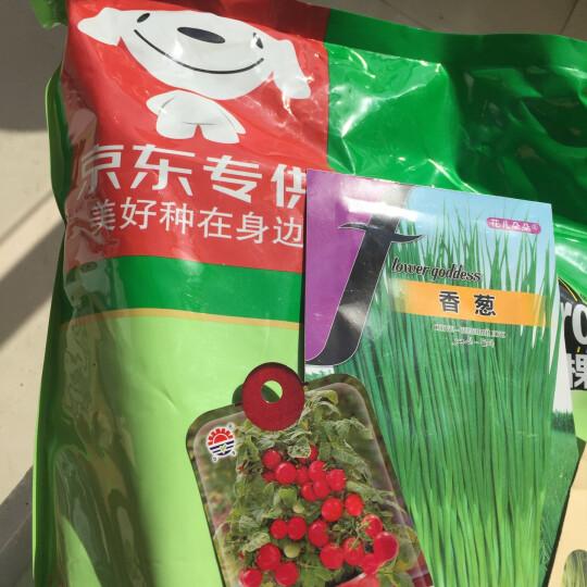 萌吖吖 迷你胡萝卜种子 红色 蔬菜种子 25粒/袋 晒单图