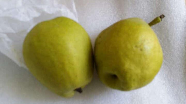 树懒果园 新疆库尔勒香梨 5斤装 精品大果新鲜梨子 晒单图