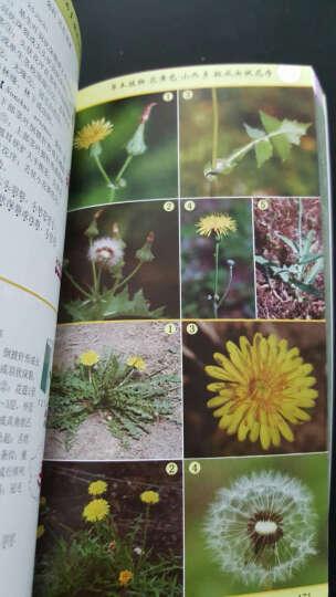 苔藓册-中国常见植物野外识别手册   晒单图