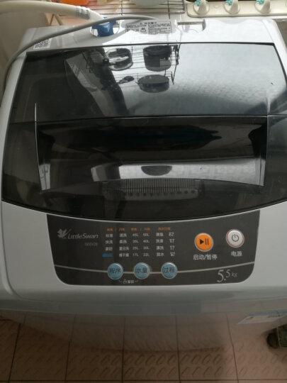 小天鹅(LittleSwan)波轮洗衣机全自动自营 迷你洗衣机 小家优选 品质电机 5.5公斤 TB55V20 晒单图