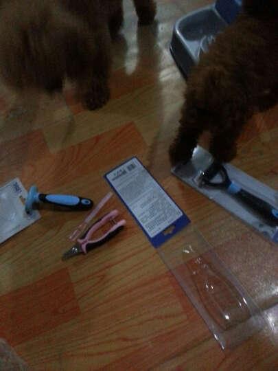 得乐宠物针梳祛毛梳美毛猫梳狗狗梳子宠物去毛除毛脱毛梳造型梳 蓝色小号 晒单图